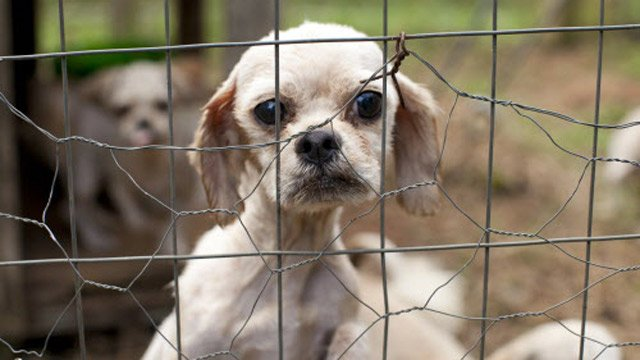 One of the rescued dogs. (Jason E. Miczek/AP Images for The Human Society)