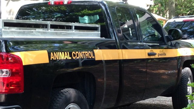 Animal control officers in the neighborhood of the cat attack. (June 12, 2014/FOX Carolina)