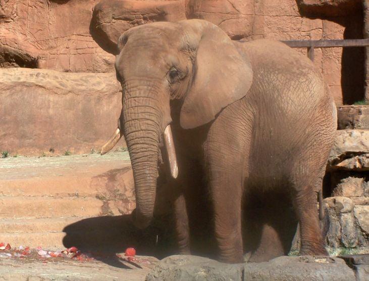 Joy a.k.a. Joni at the Greenville Zoo (Courtesy: Greenville Zoo)