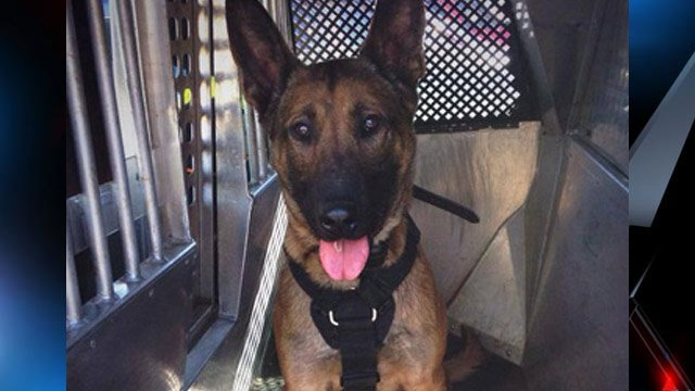 Greenville police say K9 officer Gio made the arrest Friday. (Source: Greenville Police Dept. Facebook)