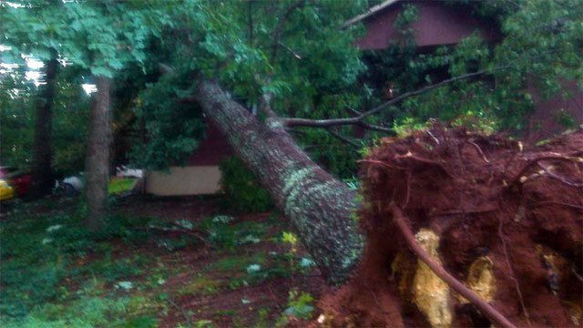 A tree downed during Sunday's storms in Rutherford County. (July 28, 2014/E. Gonzales)