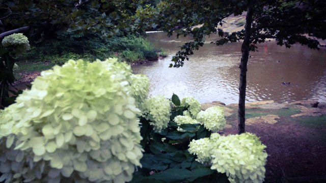 Flowers in Falls Park after the rain. (Aug. 1, 2014/FOX Carolina)