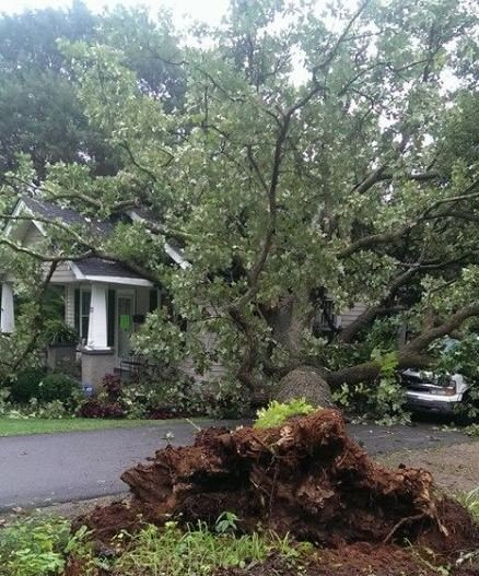 Tree into home (Courtesy: Michael Ward)