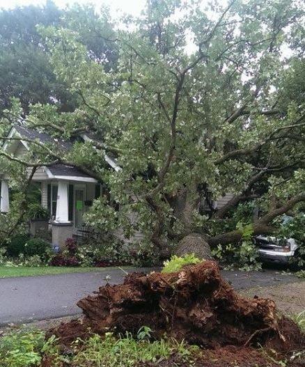Tree into home (Courtesy: Michael Ward)