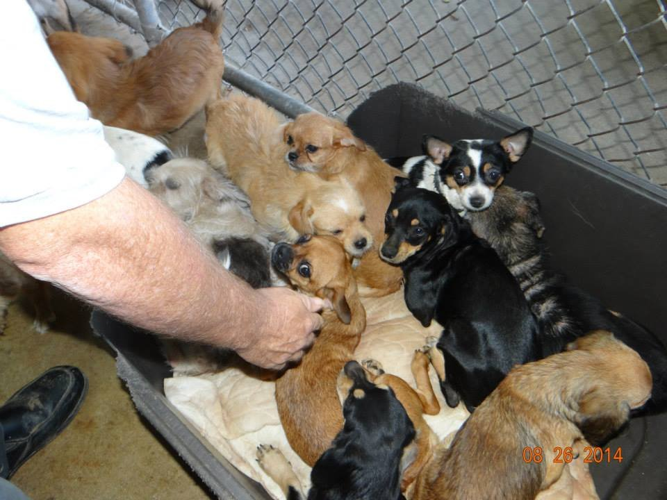 Dogs taken from home (Courtesy: Laurens Co. Humane Society / Facebook)
