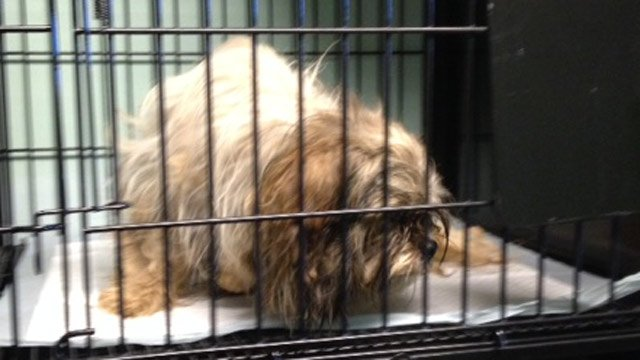 One of the dogs taken to the Greenville Humane Society. (Aug. 27, 2014/FOX Carolina)