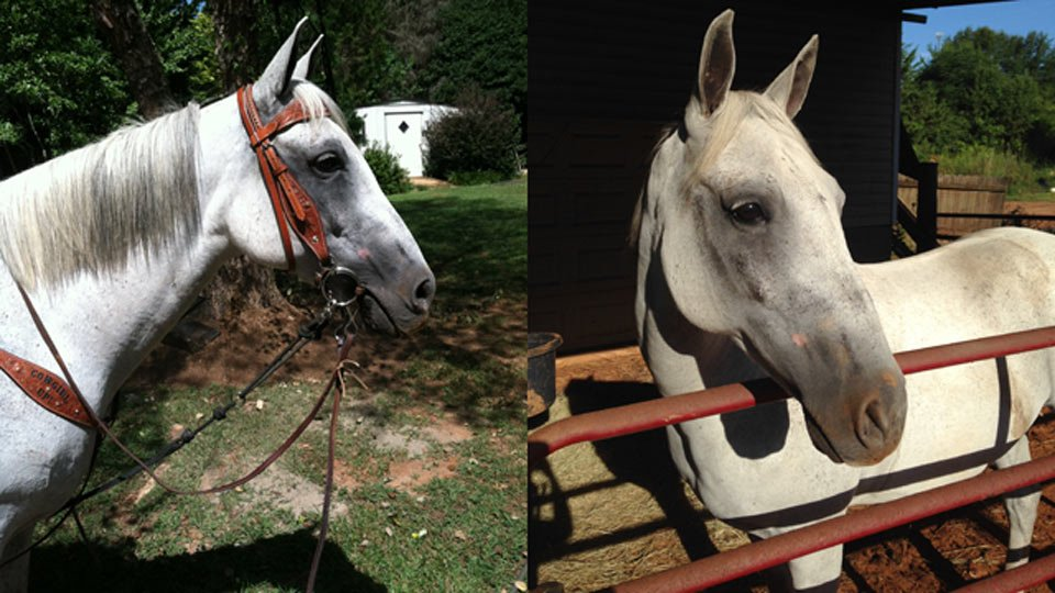 Missing quarter horse Ghost. (Source: Nettie Griffin)