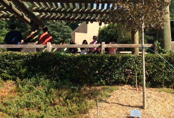 Tree dedication ceremony (FOX Carolina)