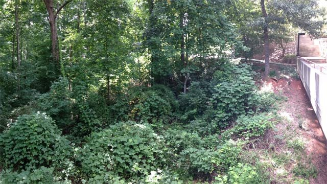 Kudzu and other plants grow up around Lightsey Bridge on Clemson's Campus. (Source: Clemson University)