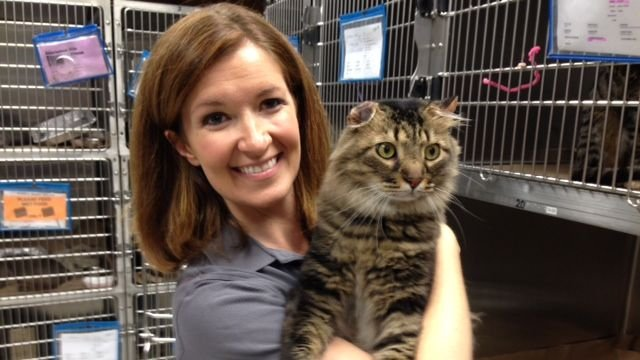 Arthur from Greenville County Animal Care