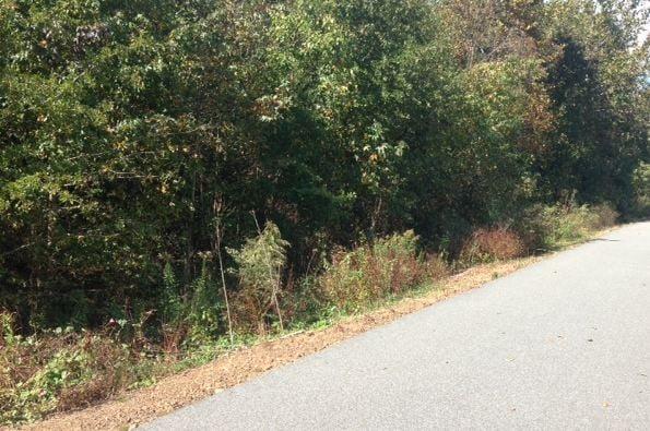 Dense brush along the Swamp Rabbit Trail near the area where Hughey was located (FOX Carolina)