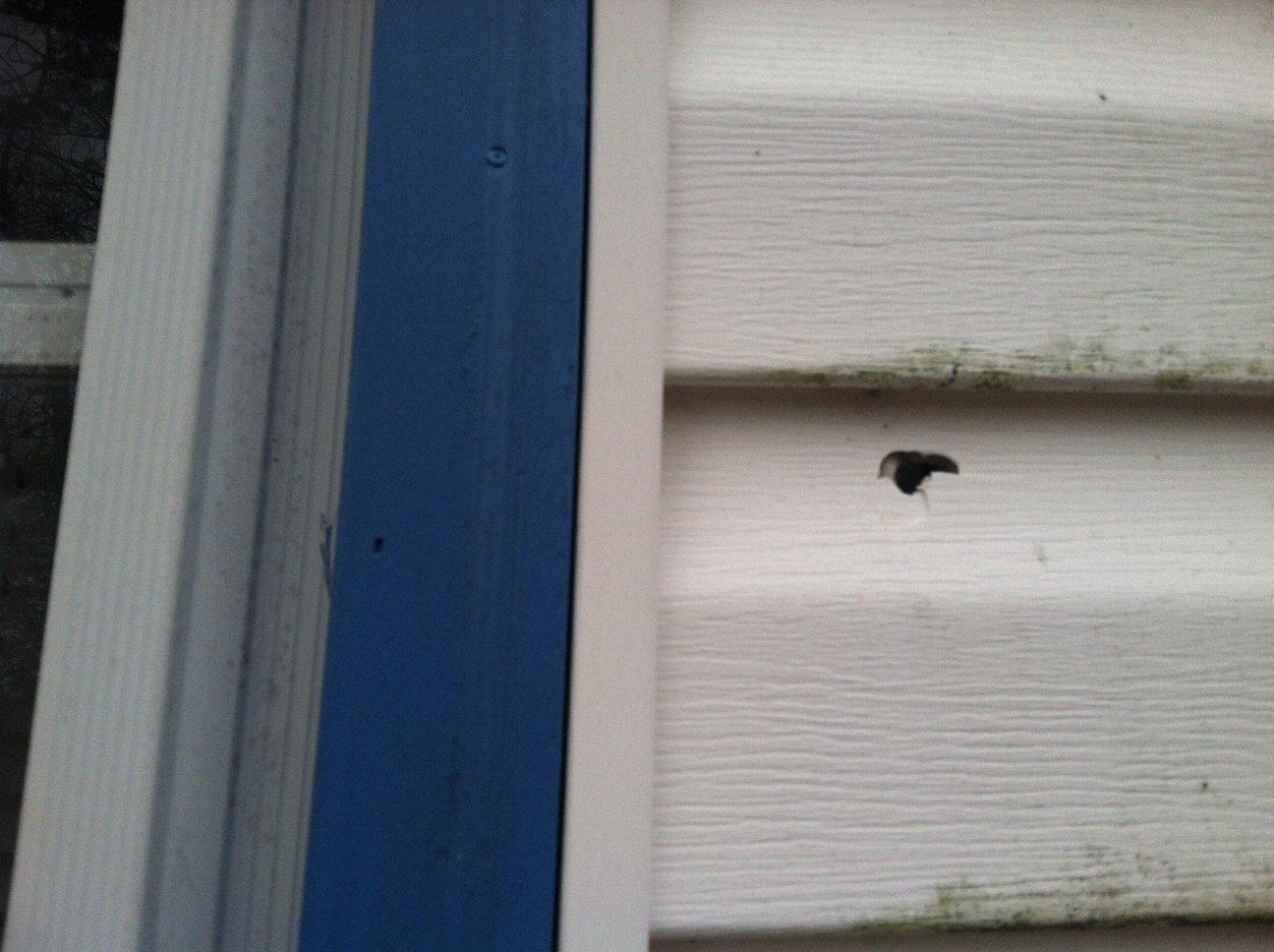 Hole shows where bullet penetrated Iva home (FOX Carolina)
