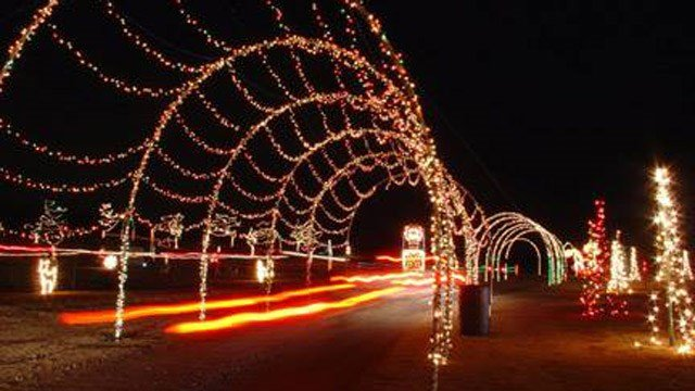 hollywild christmas lights