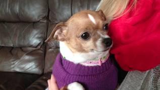 Lucy the chihuahua (Jan. 1, 2015/FOX Carolina)