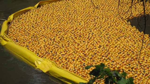 Groceries for a year up for grabs in the Reedy River Duck Derby ...