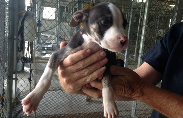 1 of 2 emaciated dogs taken from the Gray Court home (FOX Carolina/ July 29, 2015)
