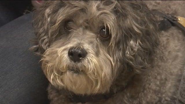 Cosmo survived the tragic collision. (Oct. 25, 2015/FOX Carolina)