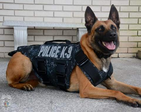 Spartanburg K9 with new Threat Level 2 bulletproof and stabproof vest (Courtesy: Spartanburg Police Facebook Page)