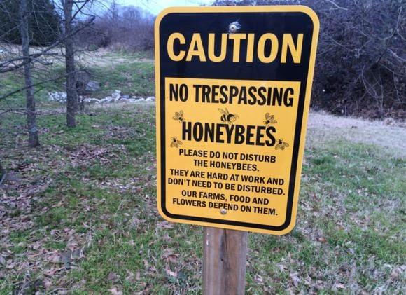 Location where beehives once sat. (Source: Fox Carolina)